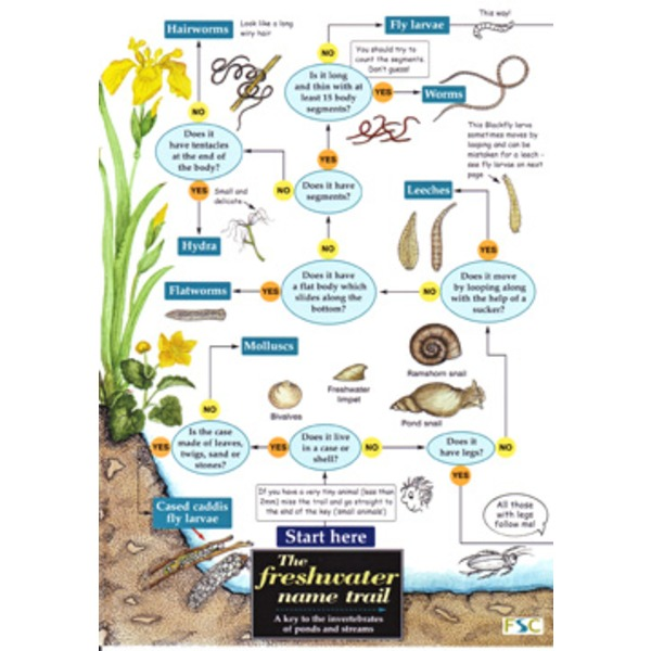 FSC Field Guide to Freshwater Life