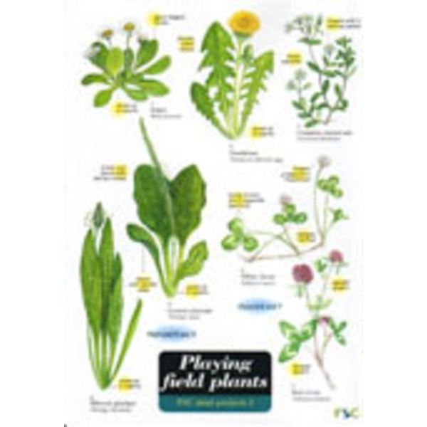 FSC Field Guide to Playing Field Plants