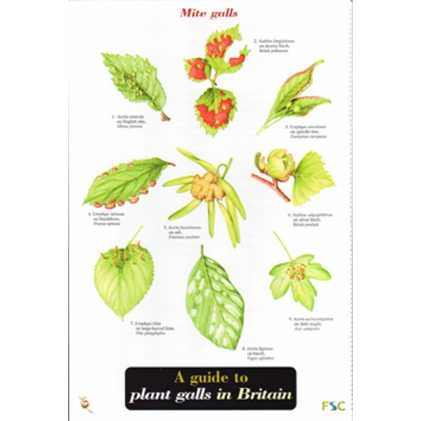 FSC Field Guide to Plant Galls in Britain