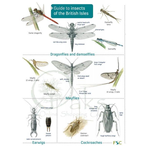 FSC Guide to Insects of the British Isles
