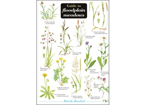 FSC Field Guide to Floodplain Meadows