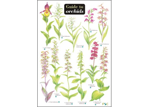 FSC Field Guide to Orchids