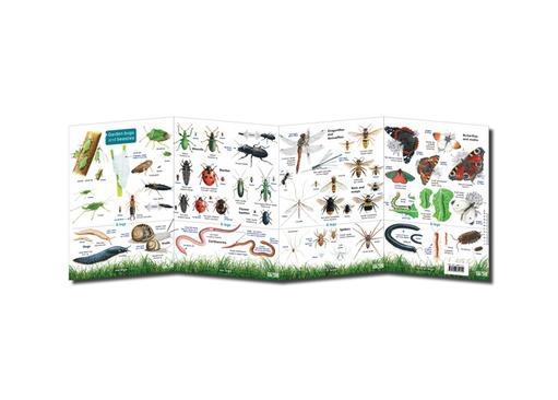 FSC Garden Bugs and Beasties