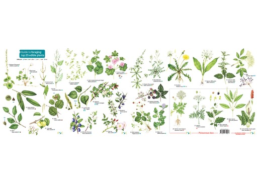 FSC Guide To Foraging Wild Foods