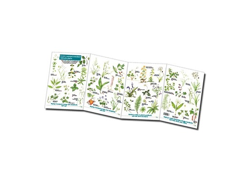 FSC Ancient Woodland Indicator Plants | ID Chart