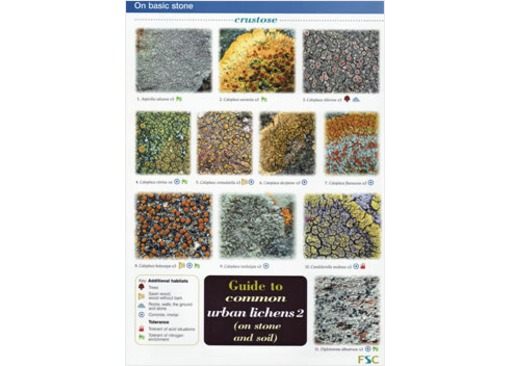 FSC Field Guide to Common Urban Lichens (on stones and soil)