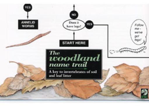FSC Field Guide to Woodland Mini-beasts