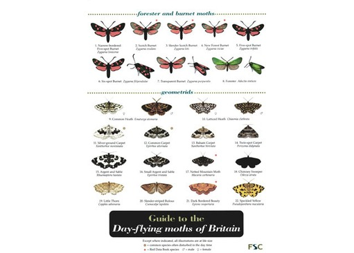 FSC Field Guide to Day-flying Moths