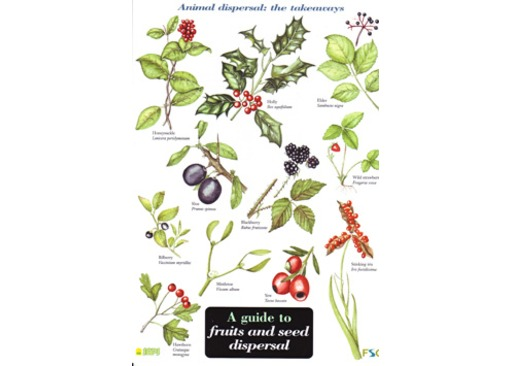 FSC Field Guide to Fruits and Seed Dispersal