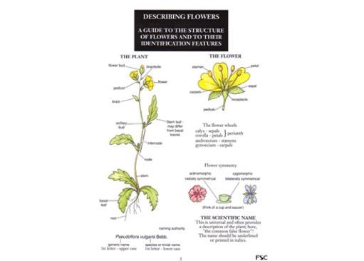 FSC Field Guide to describing Flowers