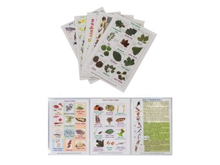 Deciduous Woodland Wildlife Discovery Pack