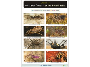 FSC Field Guide to Harvestmen of the British Isles