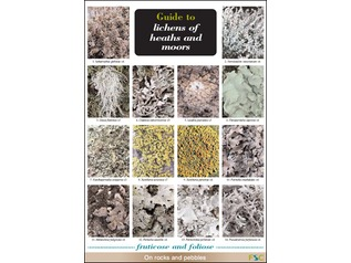 FSC Field Guide to Lichens of Heaths and Moors