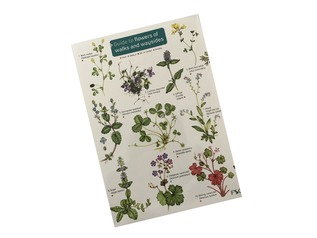 FSC Guide to Flowers of Walks and Waysides