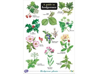 FSC Field Guide to Hedgerows