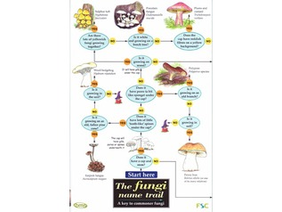 FSC Field Guide to fungi / mushrooms