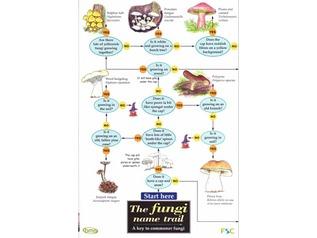 FSC Field Guide to fungi / mushrooms