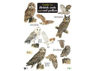 FSC Field Guide to Owls and Pellets