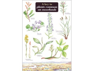 FSC Field Guide to Plants Common on Moorlands