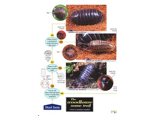 FSC Field Guide to Woodlice