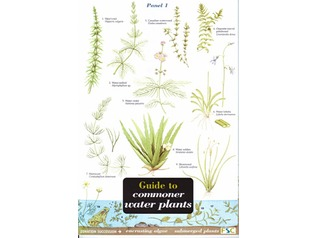 FSC Field Guide to Commoner Water Plants