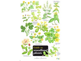FSC Field Guide to Woodland Plants