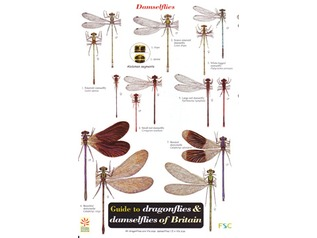 FSC Field Guide to Dragonflies and Damselflies of Britain