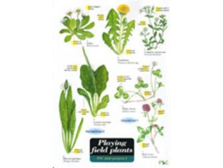 FSC Field Guide to Playing Field Plants