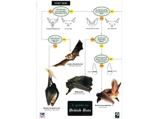 FSC Field Guide to British Bats