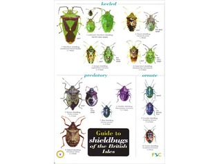 FSC Chart - Shieldbugs of the British Isles