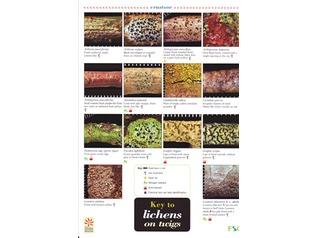 FSC Field Guide to Lichens on Twigs