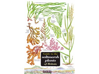 FSC Field Guide to Saltmarsh Plants of Britain